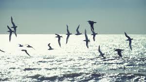 birds+sky
