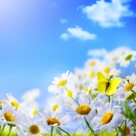 pictures-of-spring-flowers