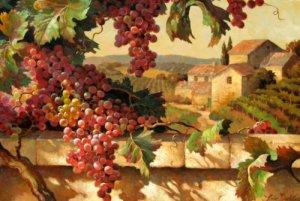 harvest- tuscany