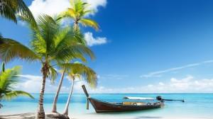palm-trees-palms